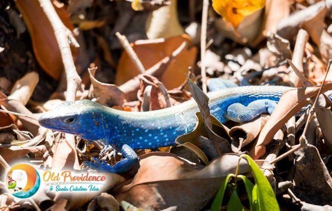 foto-blue-lizard-old-providence-2