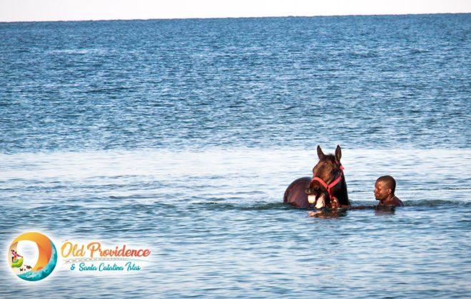 foto-raizal-caballo-feliz-old-providence-santa-catalina