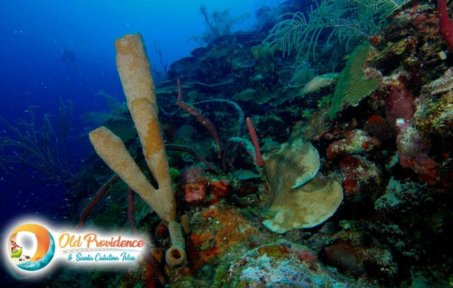foto-buceo-3-old-providence